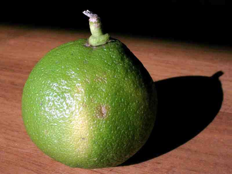 Itialian Bergamot Fruit