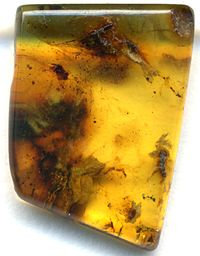Fossilized Amber