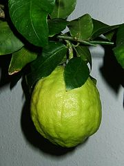 Citrus (Citron Fruit)