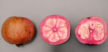 Pink Quava Fruit