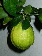 Citron Fruit